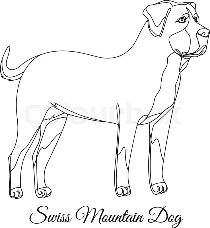 738x800 Swiss Mountain Dog Outline Vector Illustration Stock Vector
