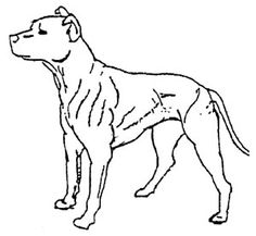 236x217 Drawings Of Dogs Outlined Dog Munching On Popcorn Dog Clip Art