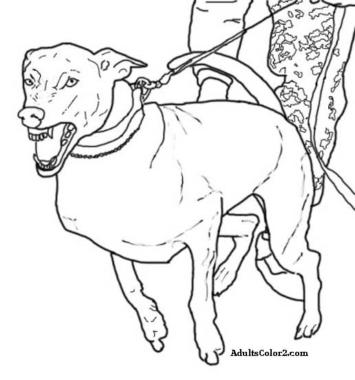 Seal Coloring In Dogs - Worksheet & Coloring Pages