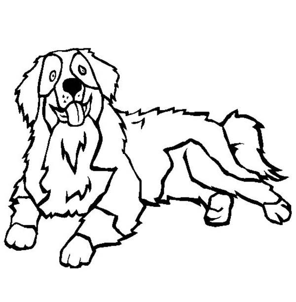 600x612 Pages Sketch Bernese Mountain Dogs Forward Dog