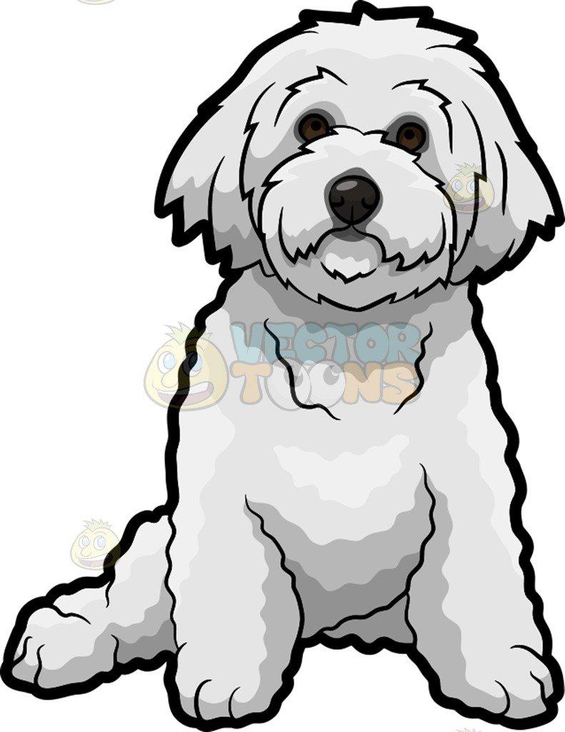 Modern Canine Eye Anatomy Embellishment - Anatomy Ideas - yunoki.info