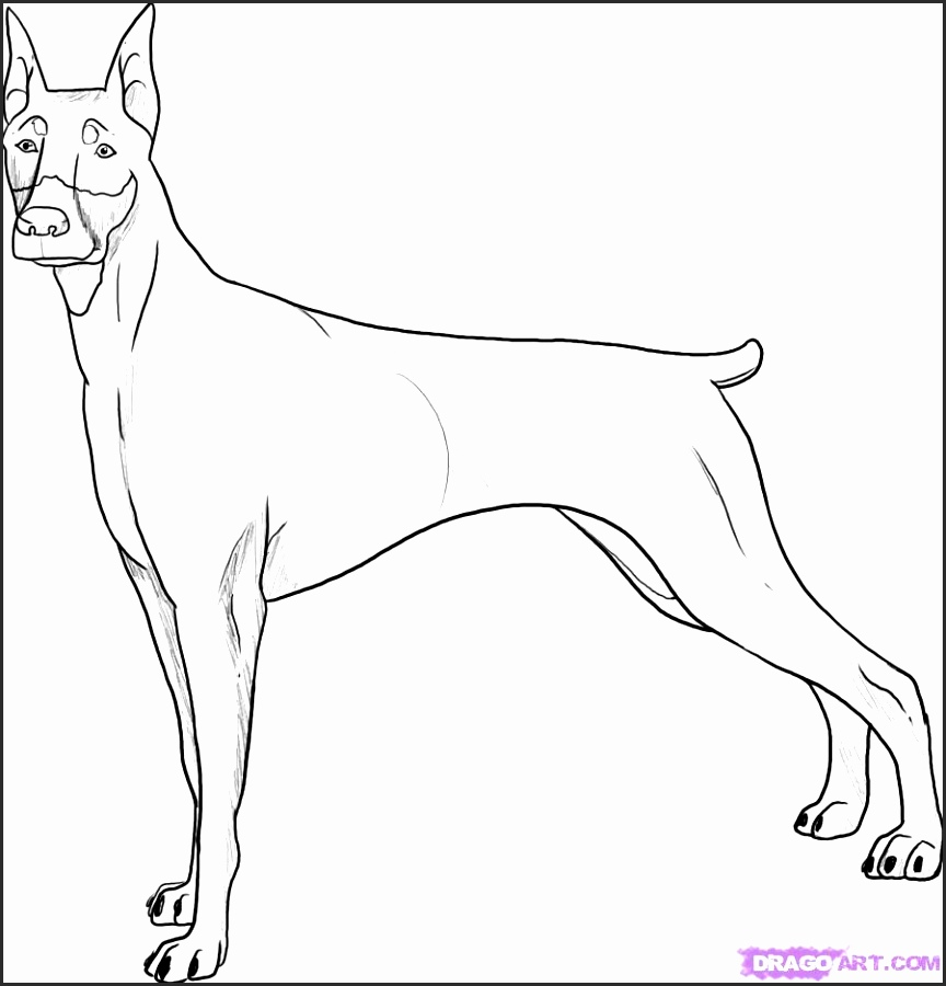 864x900 How To Draw A Boxer Dog Face Ongzc Fresh Boxer Dog Face Drawing