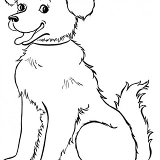320x320 Tag For Dog Image Drawings To A Male Dog You Can Sometimes Make