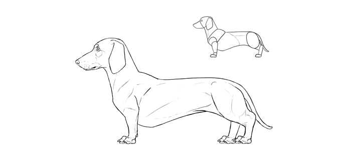 700x317 How To Draw A Dog Details Make The Difference