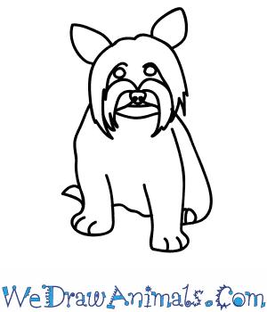 300x350 How To Draw A Yorkie Dog