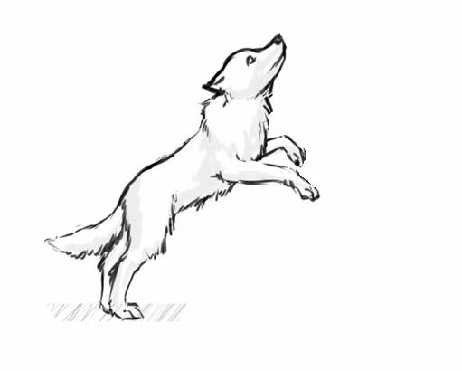Dog Jumping Drawing