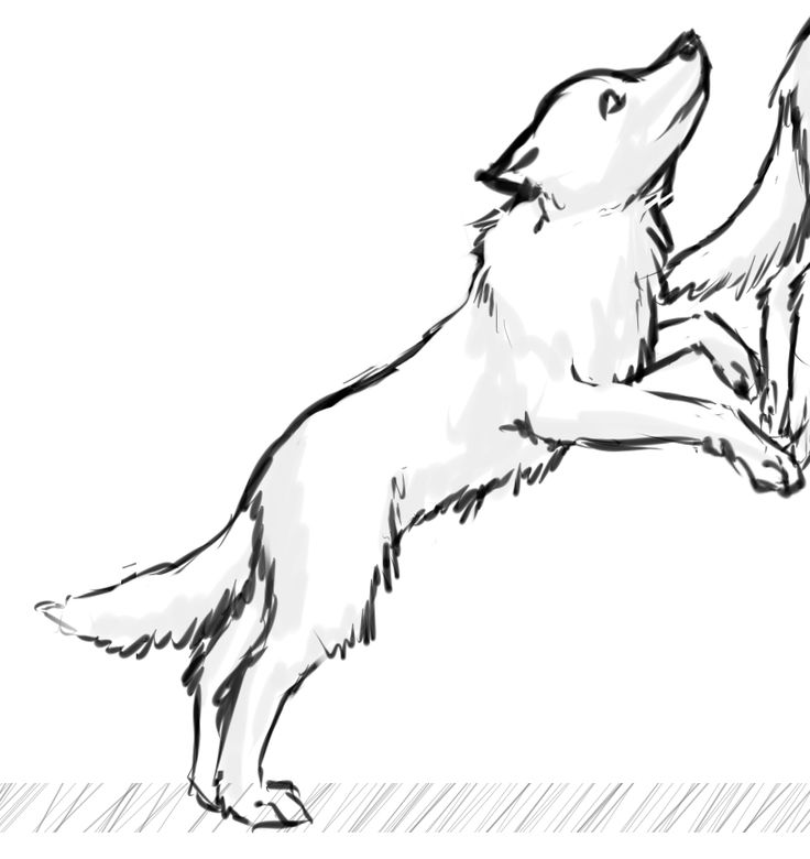736x780 Image Result For Dog Jumping Drawing Springboard