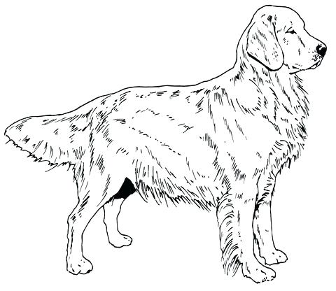 480x416 Labrador Retriever Coloring Pages Retriever Coloring Page Dog