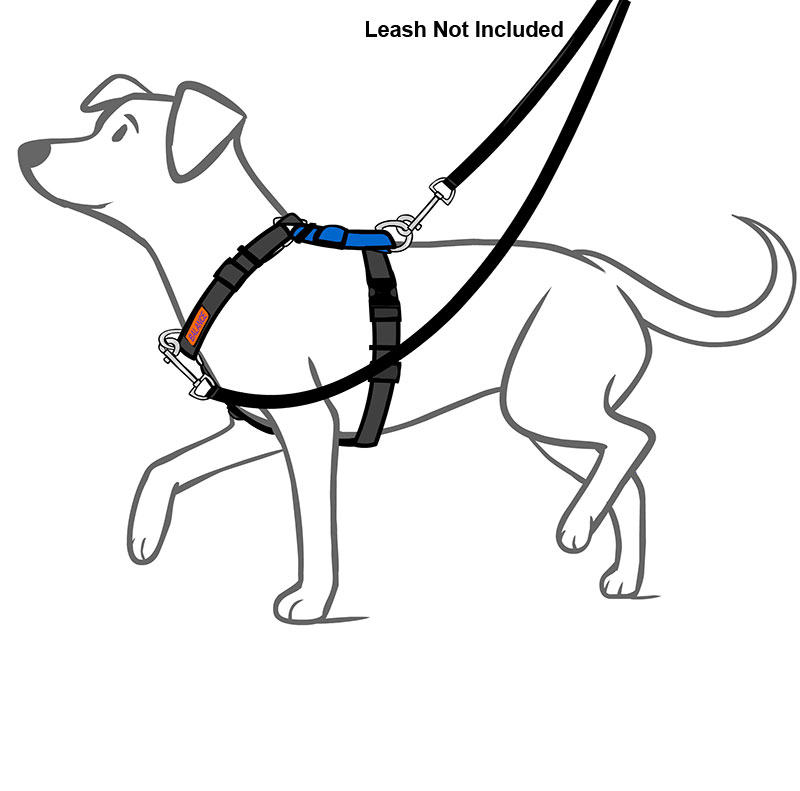 The Best Free Harness Drawing Images Download From 50 Free Drawings