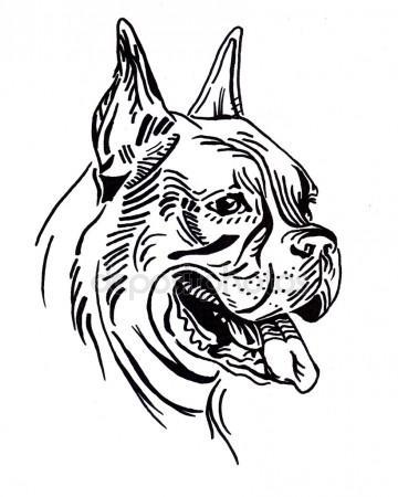 360x450 Boxer Dog Stock Photos, Royalty Free Boxer Dog Images