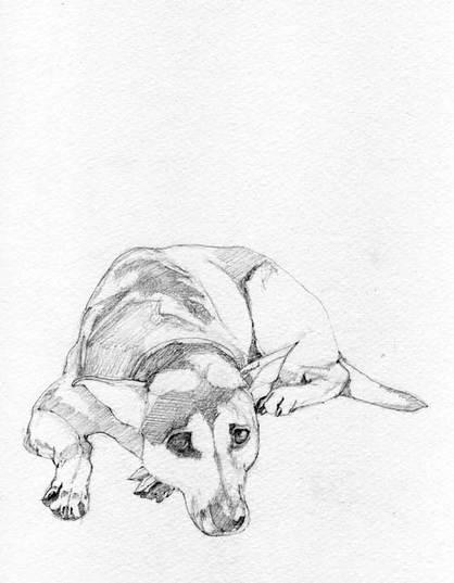 dog pencil drawing at getdrawings free download