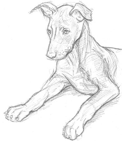 392x450 Older Puppy Sketch Wwii Gis