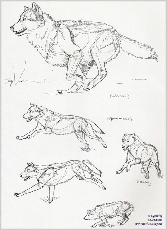 564x775 Wolves! Wolf! I Love Wolves! Drawing Wolf