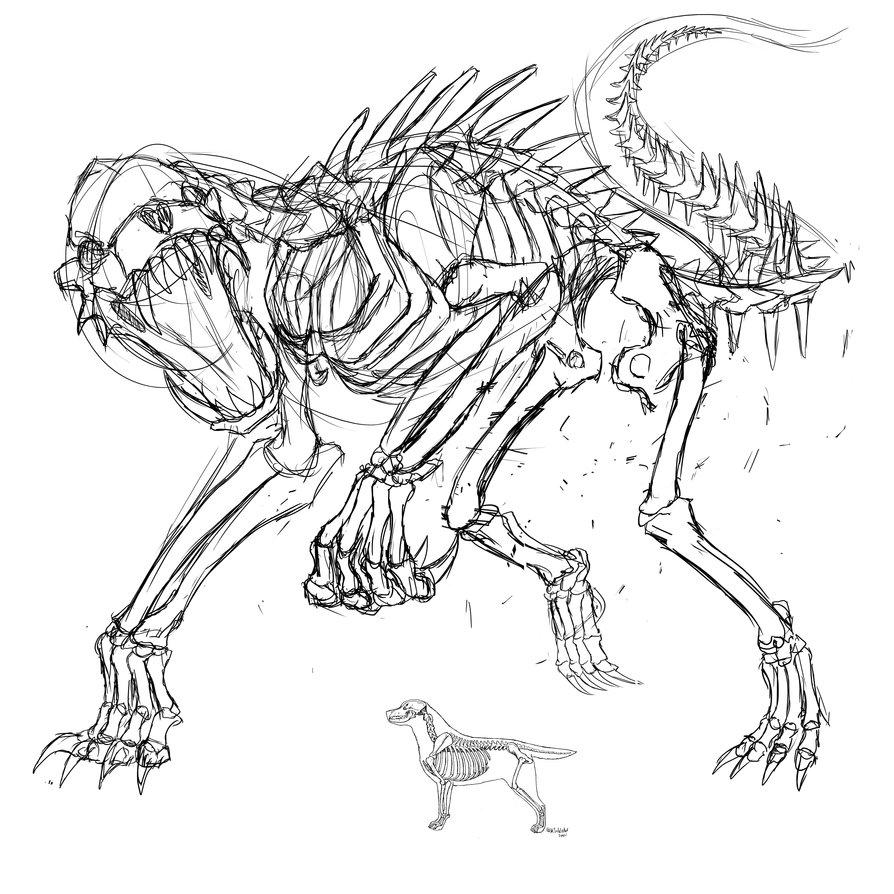 894x894 Dog Skeleton Skecth By Marinankeart