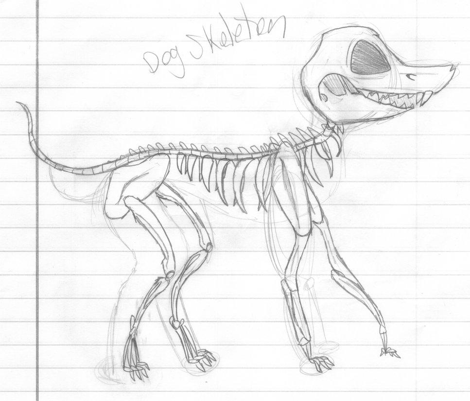 967x825 Dog Skeleton By Azailiathefox