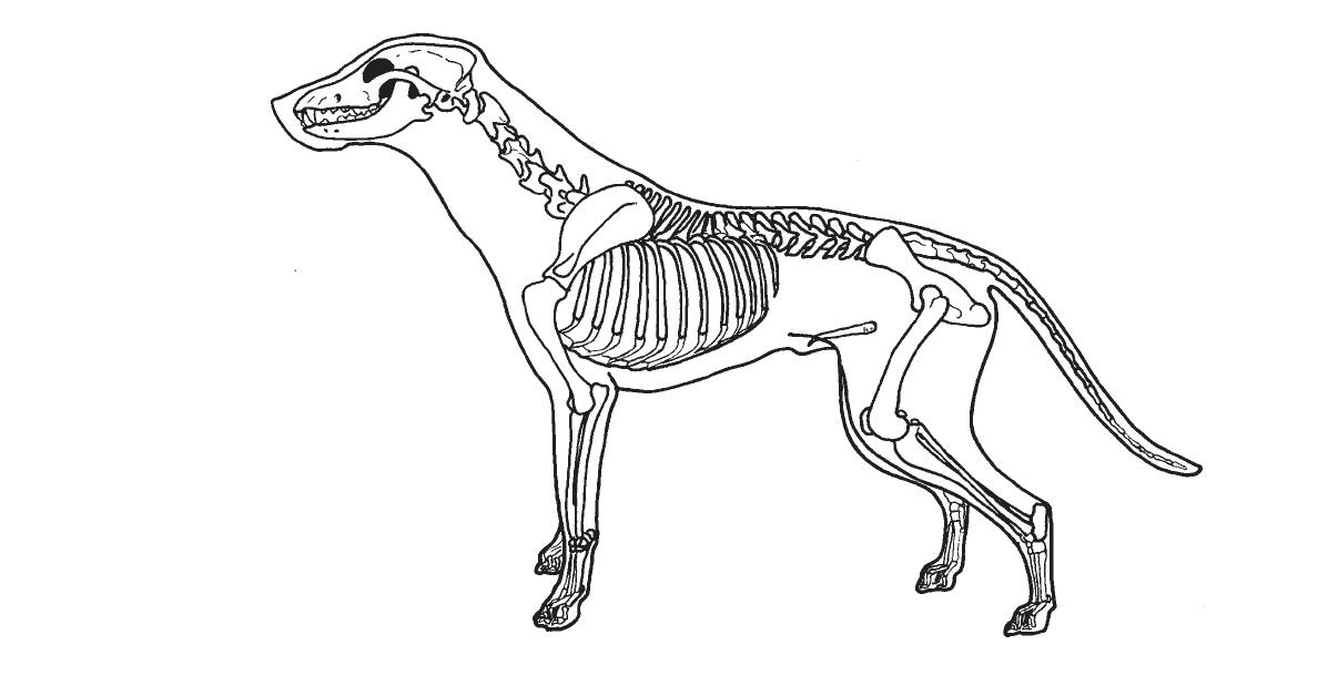 1206x610 Master Of Animal Studies (Animal Physiotherapy) Outer Body Form