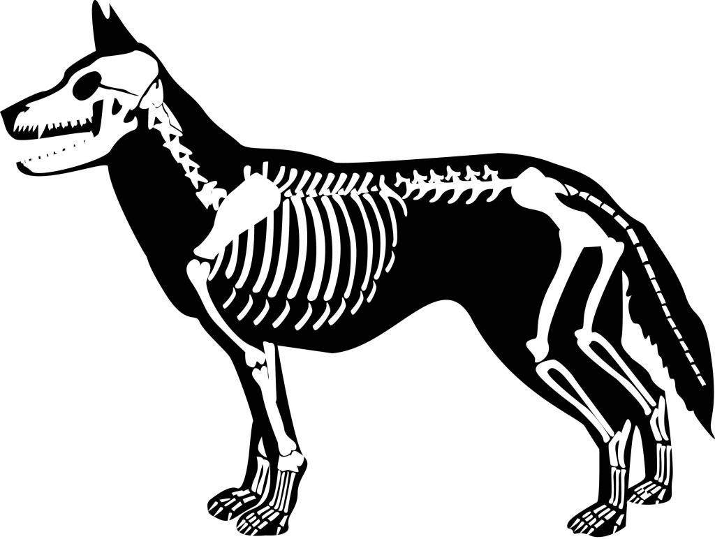 1024x772 Dog Skeleton