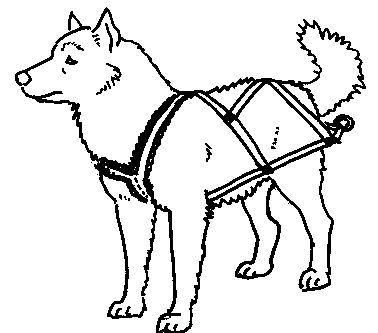 378x333 Make Your Own Sledding Freighting Or Carting Harnesses Dog