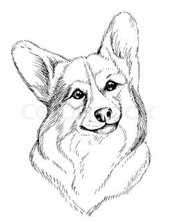 258x320 Vector Sketch Dog Pembroke Welsh Corgi Smiling Stock Vector