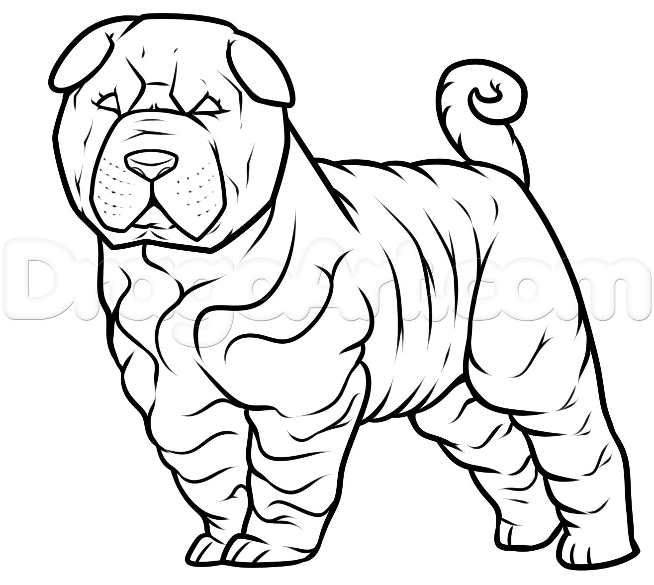 1315x1176 How To Draw A Shar Pei Step 7 Step By Steps Shar