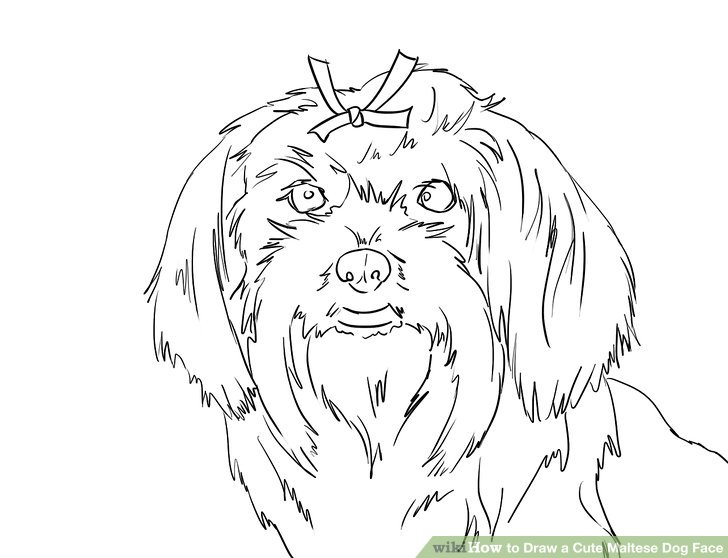 728x558 How To Draw A Cute Maltese Dog Face 12 Steps (With Pictures)