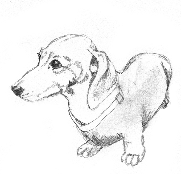 768x740 Dog Sketches
