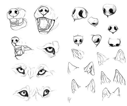 500x417 Hottest How To Draw A Cat Face