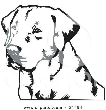 450x470 Labrador Retriever Coloring Pages Illustration Of A Retriever Dogs