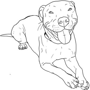 300x300 How To Draw A Pitbull Face