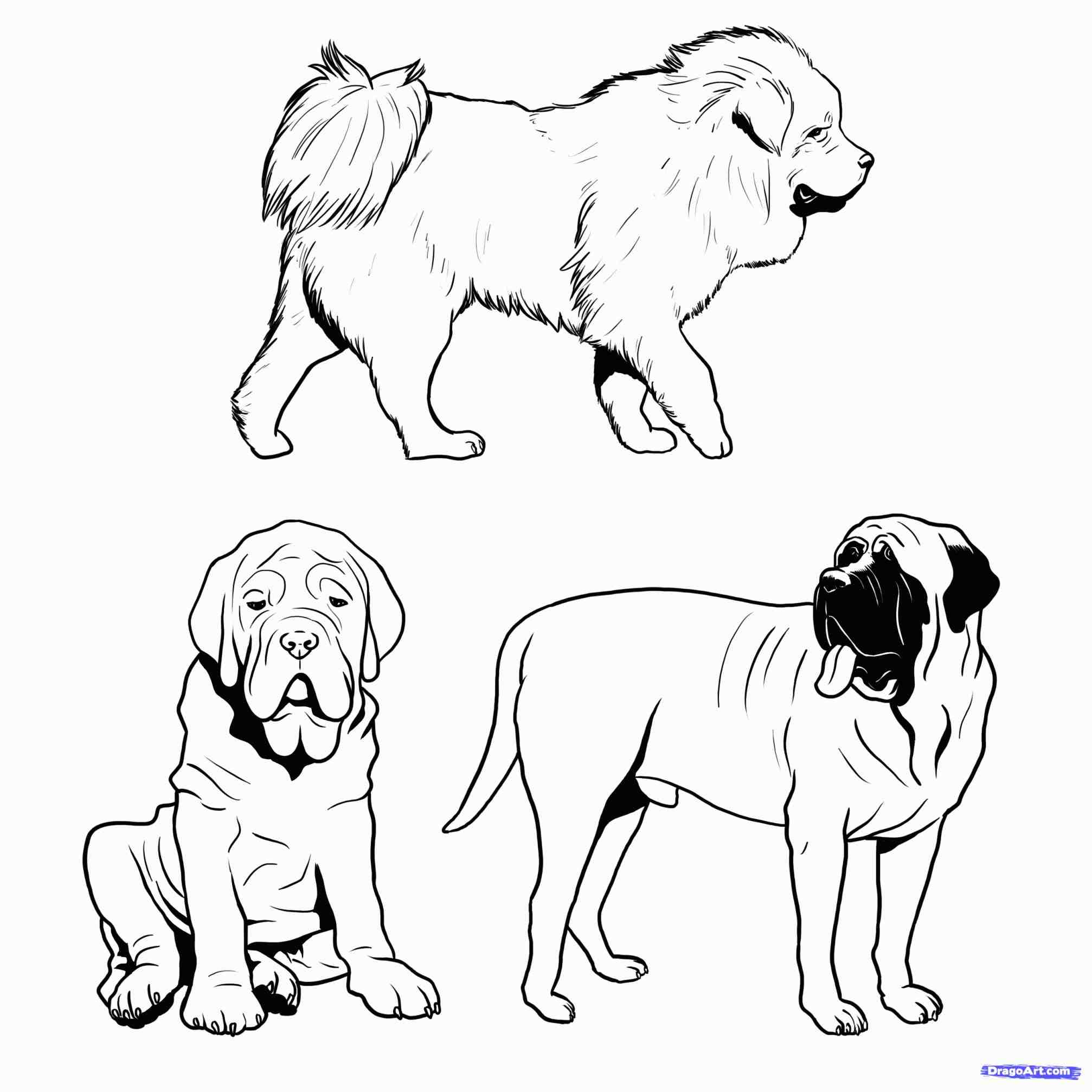 2014x2014 The Images Collection Of Coloring Dog Drawing For Kids Pages