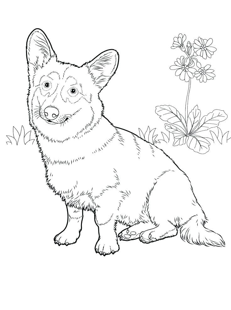 736x990 Boxer Coloring Pages