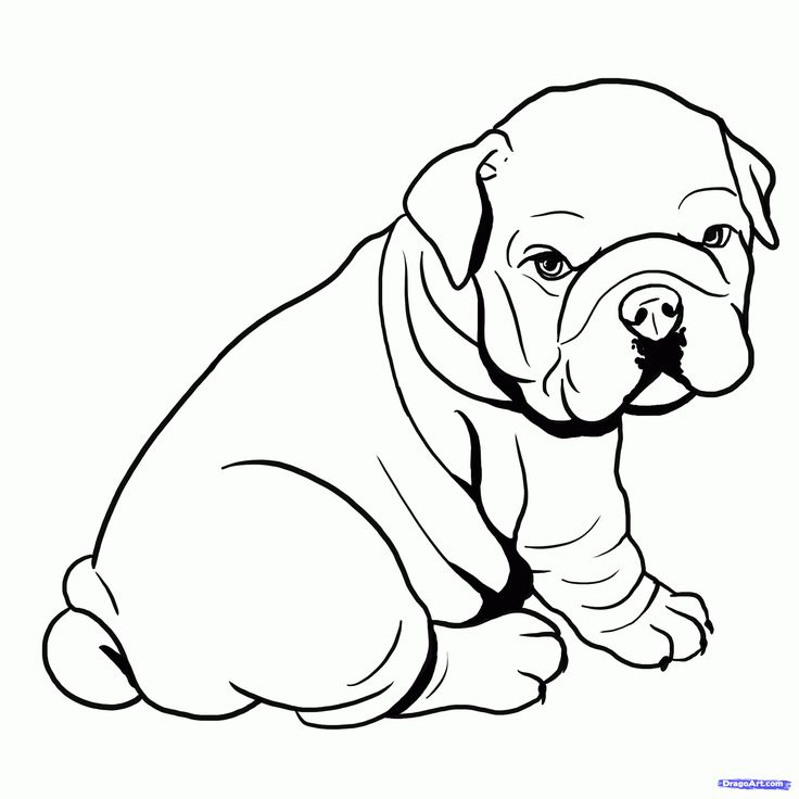 736x736 Coloring Pages For Girls Puppyes Bull Dogs To Tiny Draw Image