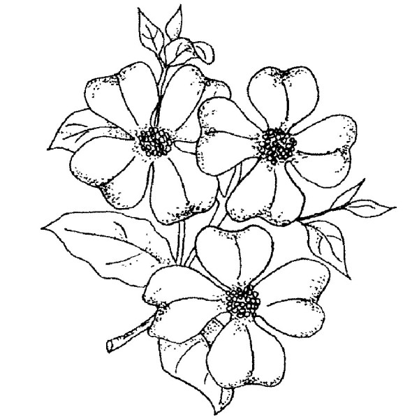 600x600 Dogwood Flower Coloring Page