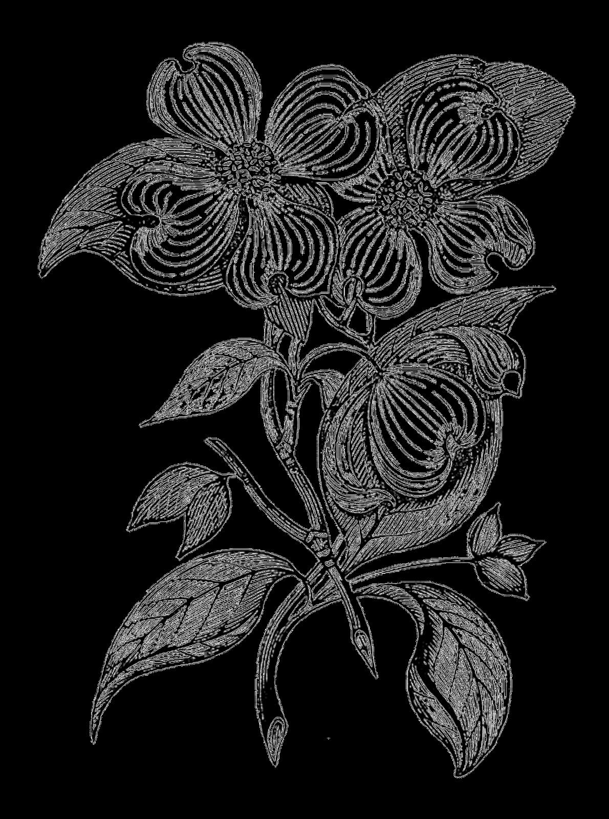 1190x1600 Digital Stamp Design Free Botanical Digital Stamp Branch