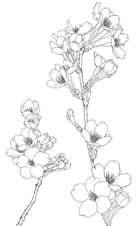 magnolia flower drawing at getdrawings com