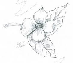 243x208 47 Best Blossoms Images On Drawing Flowers, Paint
