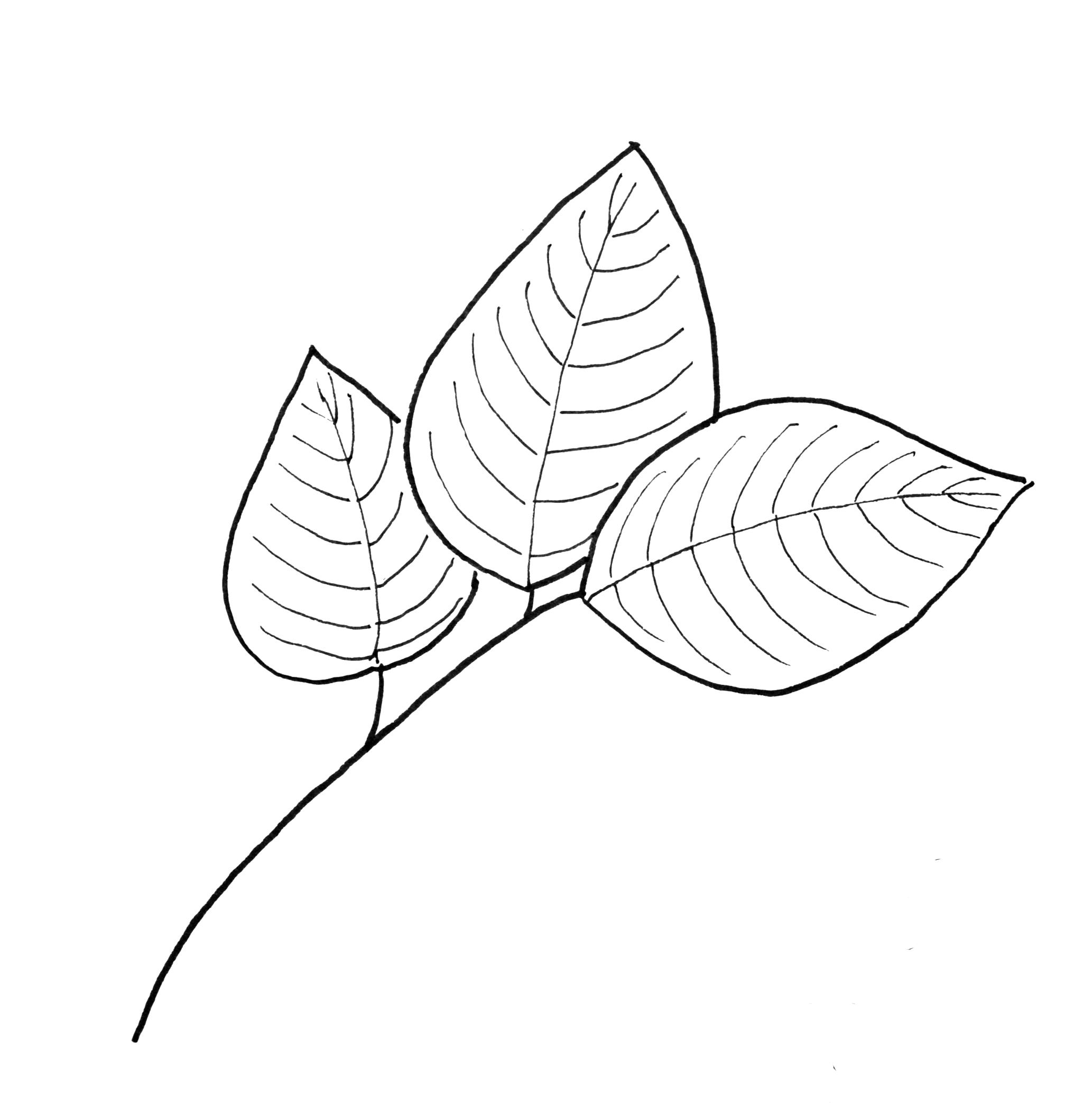 2066x2086 Fall Leaf Pattern Printables