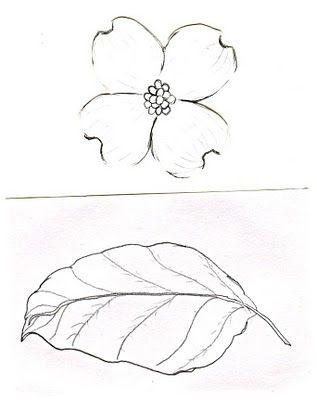317x400 Illustration Showing Flowering Dogwood (Cornus Florida), A Shrub