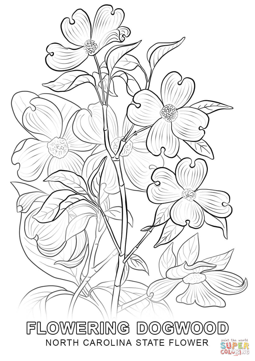 1020x1440 North Carolina State Flower Coloring Page Free Printable