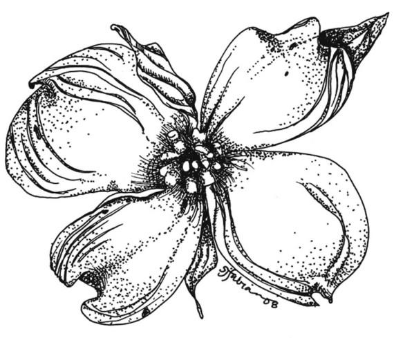 570x489 Dogwood Elegance Flower Line Art Black And White Print