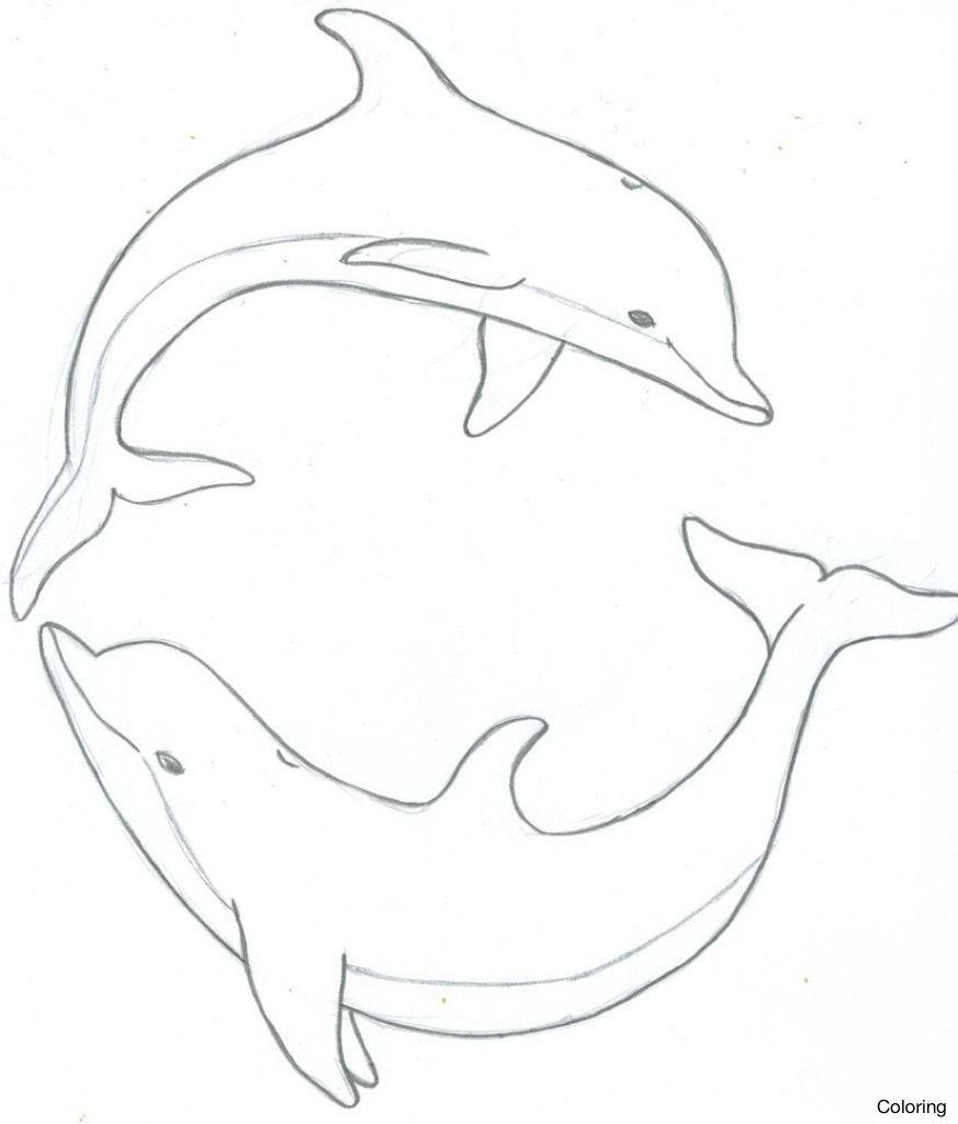 873x1024 Drawn Dolphin Water Drawing 3 Drawings Of Dolphins Coloring Pin 5