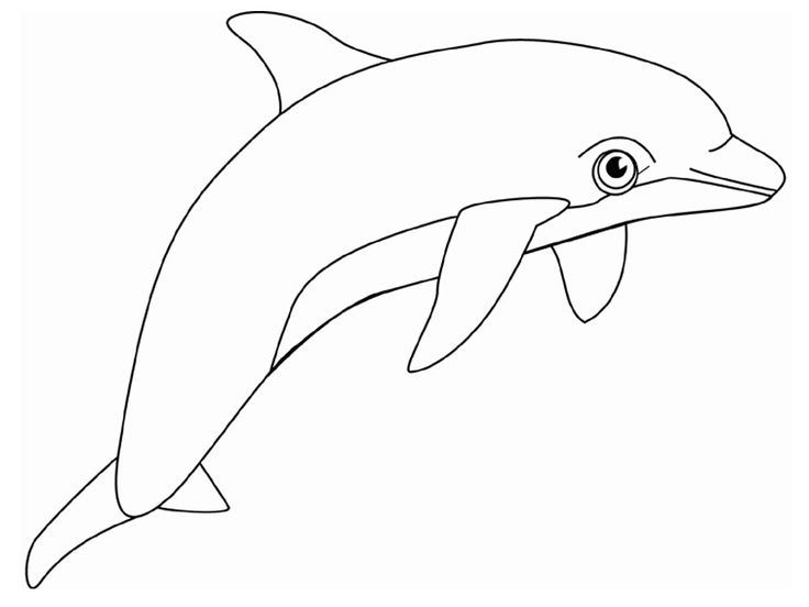 736x552 The Best Dolphin Coloring Pages Ideas On Adult