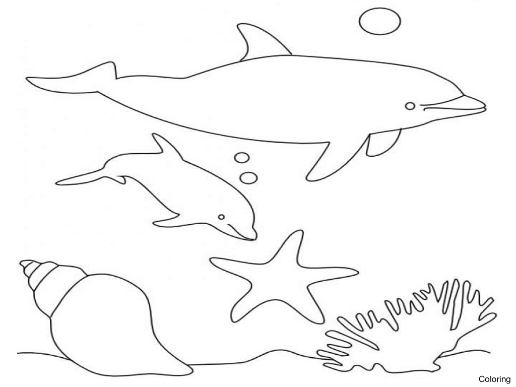 1024x768 Maxresdefault Dolphin For Kids Coloring 5 Facts About Dolphins 26f