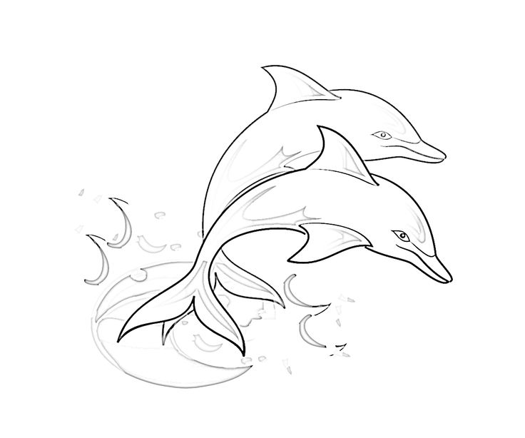 Dolphin Drawing Image
