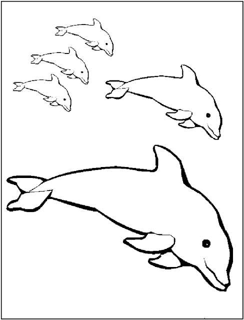 488x640 Free Printable Dolphin Coloring Pages For Kids