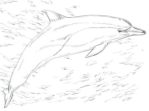 480x360 Printable Dolphin Coloring Pages Dolphin To Color Printable
