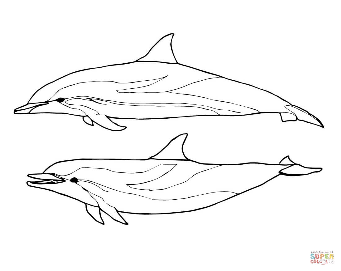 1101x877 Coloring Pages Draw Dolphin Coloring Pages Coloring Pages Draw