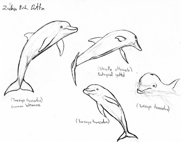 600x469 Dolphin Sketches 3 By Amorousdino