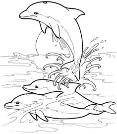 236x270 Easy How To Draw A Dolphin! Best Chalk Markers Set Httpwww