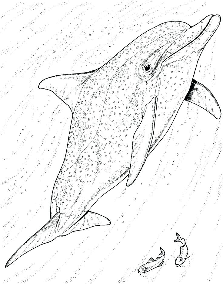 736x935 Cheap Dolphin Coloring Pages Online Facts And Information Page 1